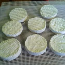 Camembert de chèvre